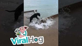 Beach Doggy Bites at Waves    ViralHog