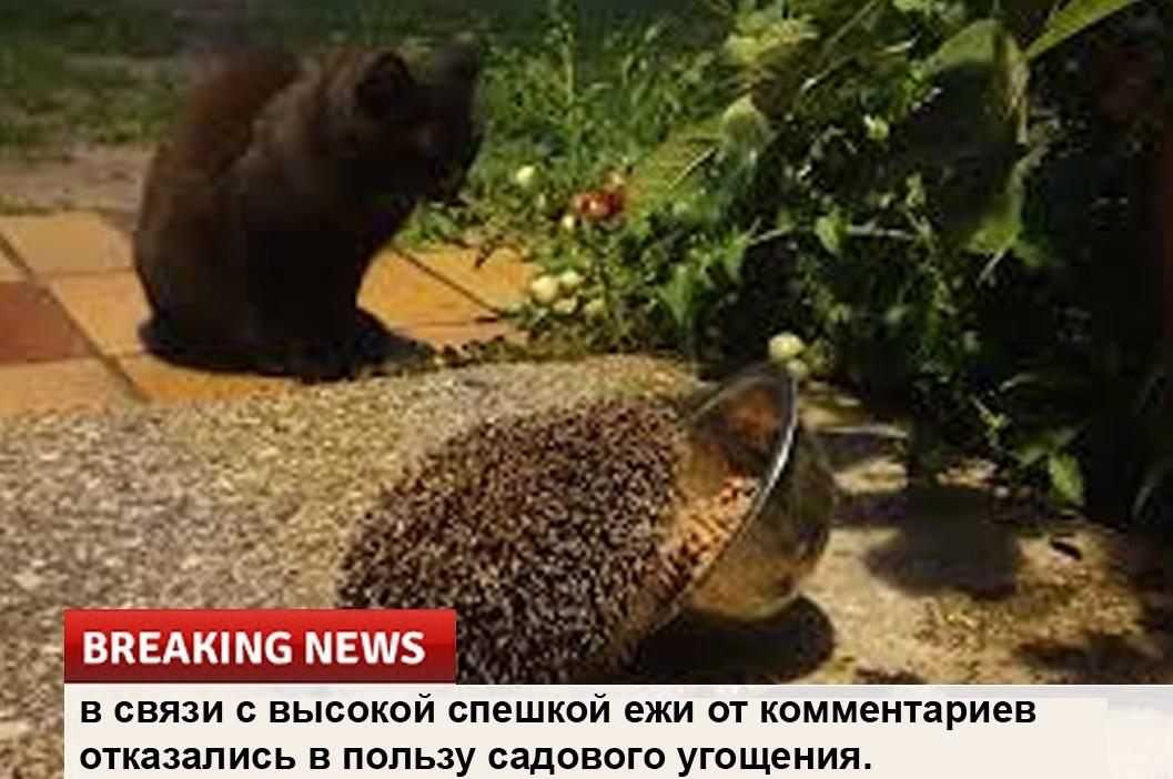 Срочные новости!