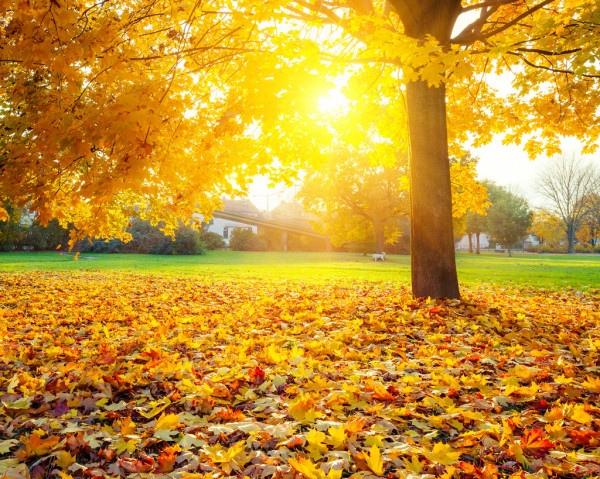 Солнечный день Проснулся, выглянул в окно. Увидел солнечный орнамент. Мне солнце чувствовать дано, что крылось пасмурными днями. Мне улыбнулся светлый день без серой вязкой поволоки. Куда-то