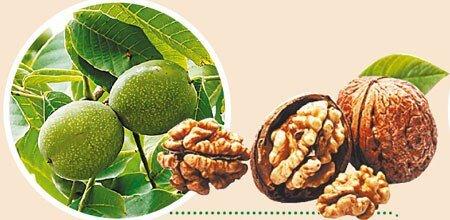 Грецкие орехи и щитовидка