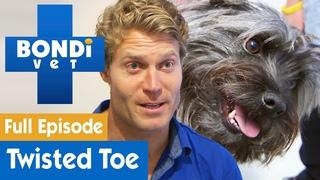 Ветеринар Бондай Бич: Терьер с вывернутым пальцем (8 сезон 2 серия) / Terrier Dog Has Brutally Twisted Toe | S08E02 | Bondi Vet