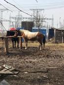 Весна💖🐎наши Рома и Чупа с волонтёром Анной 💞 #весна #проводите_время_с_пользой #конный_двор_Хутор