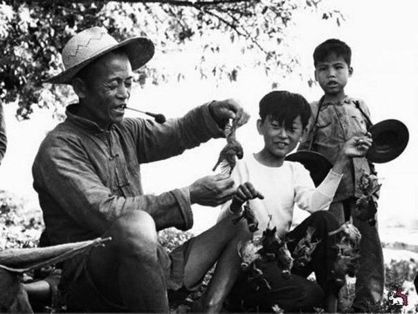 В 1958 году по инициативе Мао Цзэдуна в Китае была начата кампания по борьбе с сельскохозяйственными вредителями Главными врагами были объявлены воробьи.vvv Так как воробьи не могут быть в