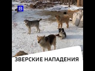 Собака бывает кусачей: бездомные животные как угроза населению