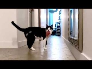 Видео: канадец доказал, что кошки тоже умеют скучать по хозяевам