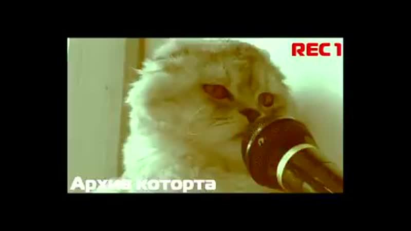 MC ЛАПА КОТОРОТ Пародия Грибы Тает лёд 240 X 426 mp4