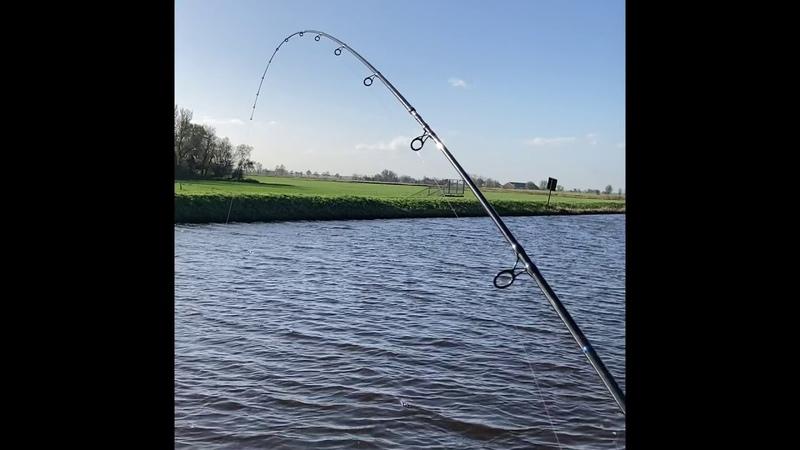 Нижняя Саксония первый в жизни дикий сазан на канале осень Пикер Preston