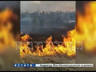 Травяной кошмар - из-за пала травы сгорело кладбище в Богородске
