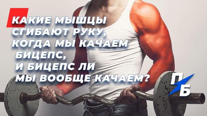 Как накачать бицепс а не предплечье Какие мышцы на самом деле сгибают руку Миография Техника 54