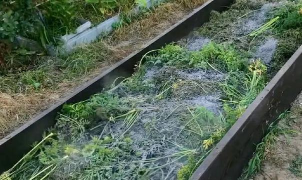 Чем наполнить грядку для огурцов, чтобы собрать отличный урожай в следующем году