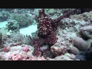 Правдивые факты об осьминогах