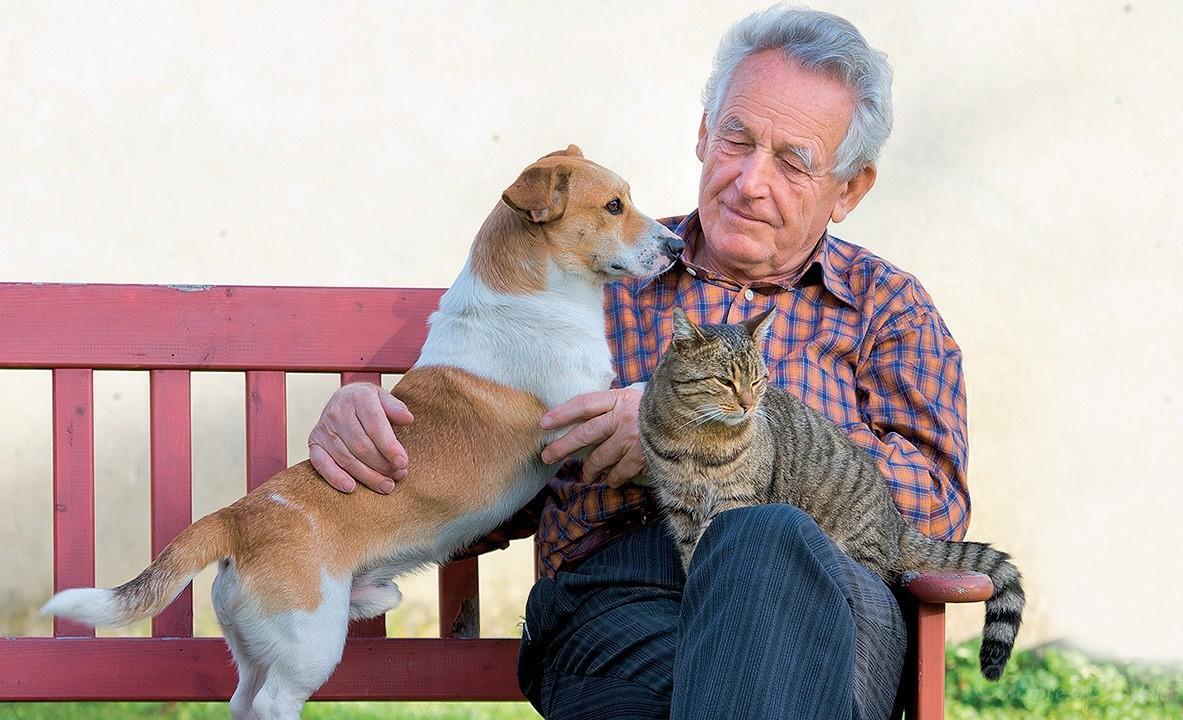 вот картинки человек кошка собака красноярске завершилось так