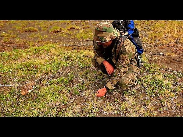 Куропатки Отважные бойцы тайги