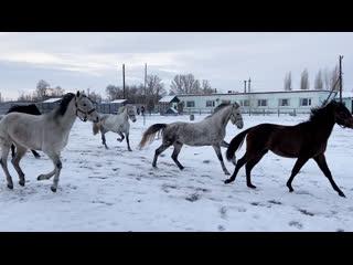 Что делают лошади в свой выходной?