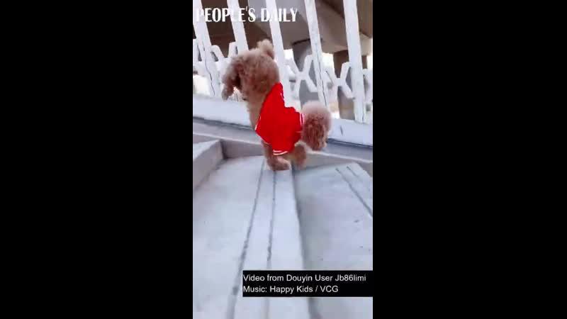 собачка бежит с лестницы