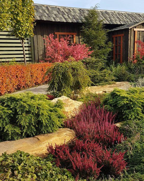 Хвойные растения: советы по подбору и посадке, изображение №2