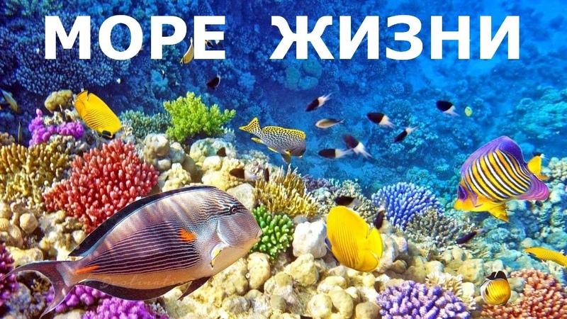Море жизни природа Документальный фильм BBC о коралловых рифах морских животных и растениях
