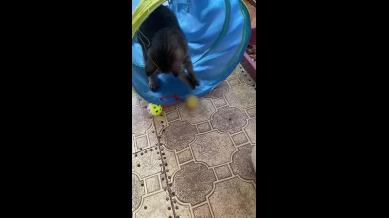 котёнок скиппи