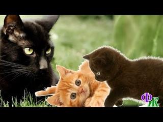 Сатана 10 «Мы не шалим, никого не трогаем» - Сатана обнюхал перепуганных малышей и решил воспитывать