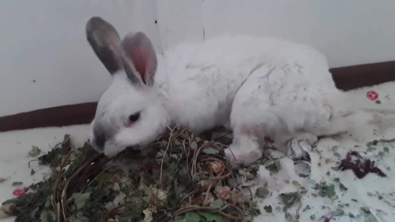 Венок из хмеля для кроликов от фермера Владимира