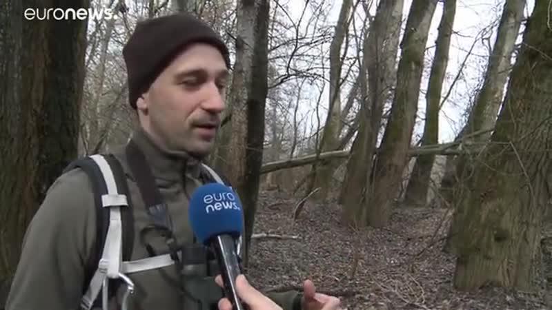 Trotz EU Naturschutz 90 Jahre alter Wald abgeholzt