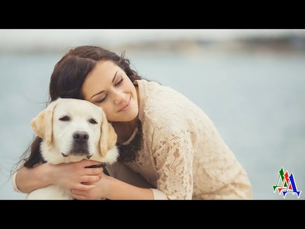 Игорю не нравилась собака его невесты и он отдал питомца в другую семью