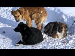 Жители посёлка Шудаяг района готовят петицию в Госсовет республики по наболевшей теме бродячих собак