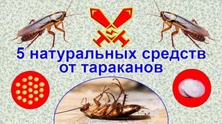 5 натуральных средств от тараканов