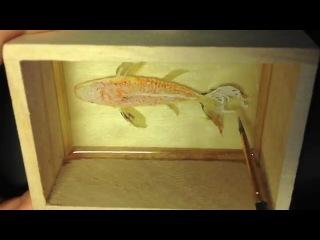 Гиперреалистичные рисунки кен ли (keng lye) 3d fish.