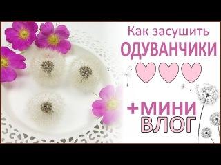 ЮВЕЛИРНАЯ СМОЛА || Одуванчики. Как засушить цветы? || Drying dandelion