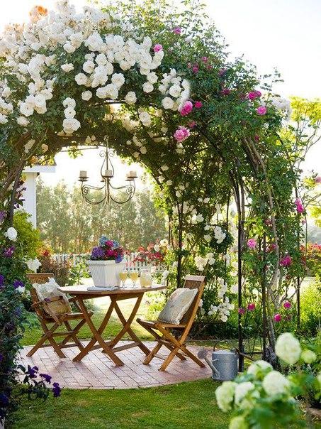 Самые популярные и красивые многолетние лианы для сада: