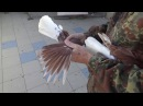 Николаевские голуби одесса 2017 Куприянов А И 0674851146