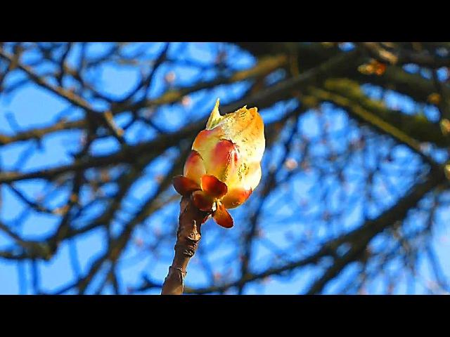 Весенняя Природа Красивое Видео о Природе Весной Весеннее Видео