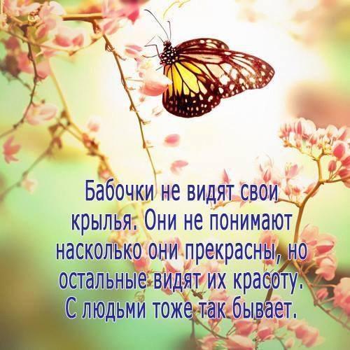 Цитаты о бабочках