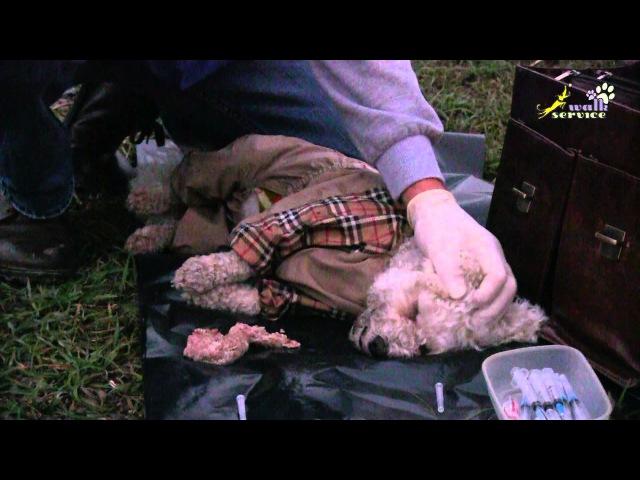 Эвтаназия усыпление собак