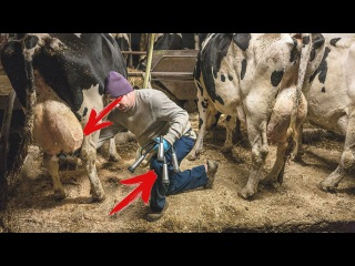 Машины для автоматического доения коров. Мойка коров и быков (современные технологии)