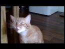 Кошки чихают