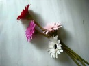 DIY - craft tutorial How to make paper flower - Gerbera Lam hoa dong tien bang giay nhun