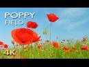4K Poppy Meadow Birdsong - Relaxing Nature Sounds Video - UHD - Meditation Sleep Study Yoga