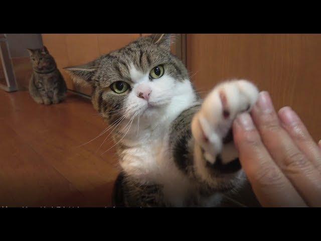 ハイタッチとまるとはな。 High five and Maru Hana