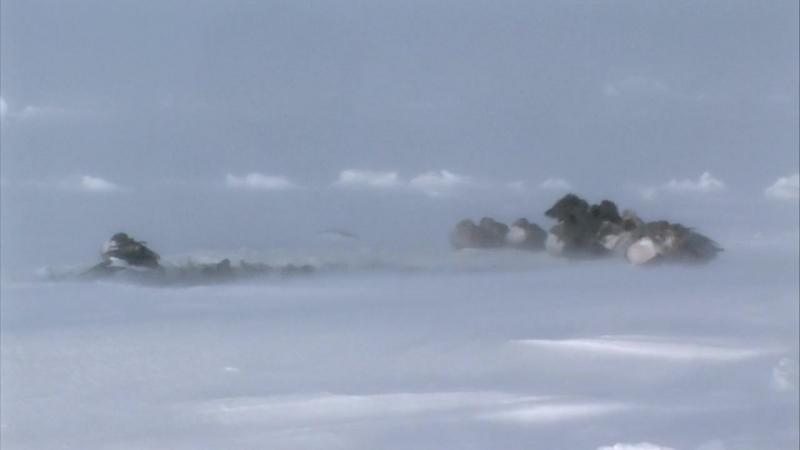 Замерзшая планета 2011 зима