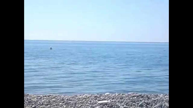 Море... Солнце... Пляж и Дельфины... Ммм... Что может быть лучше !