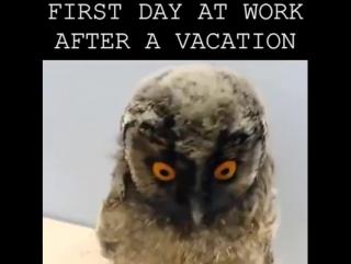 гифка сова после отпуска ведет здоровый образ