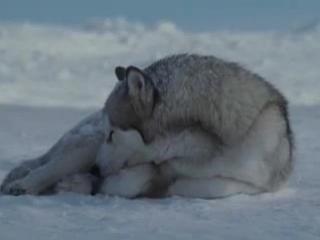 Ролик о дружбе, взаимовыручке, помощи, любви...к сожалению, так могут только животные.