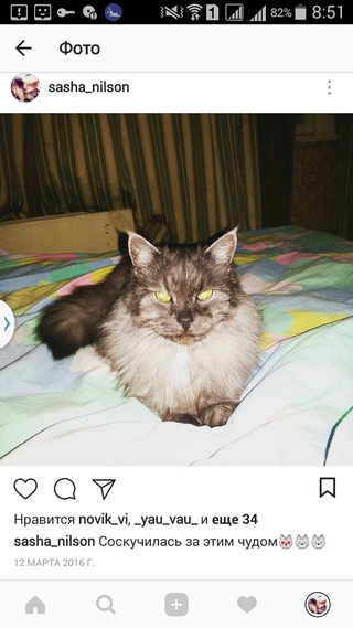 Кот 12 Лет Сильно Похудел. Как можно помочь старой кошке, если она ничего не ест, только пьет воду и спит?