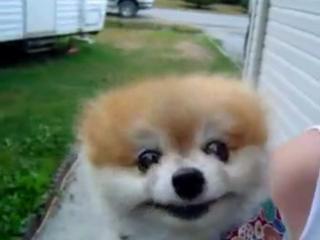 красивый пёсик