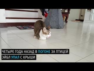 Невероятная история сильного кота