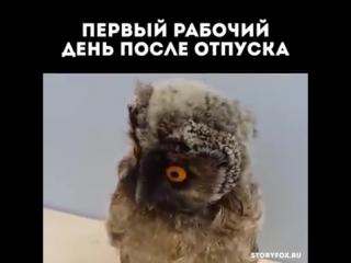 чего гифка сова после отпуска ними обязательном