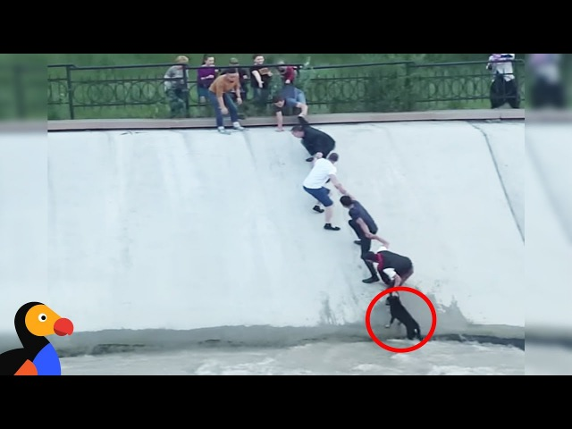 Most Intense Human Chain Ever Rescues Dog Stranded in Canal | The Dodo