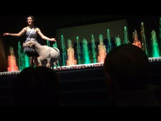 Цирк танцующих фонтанов аквамарин https://vk.com/circ_a